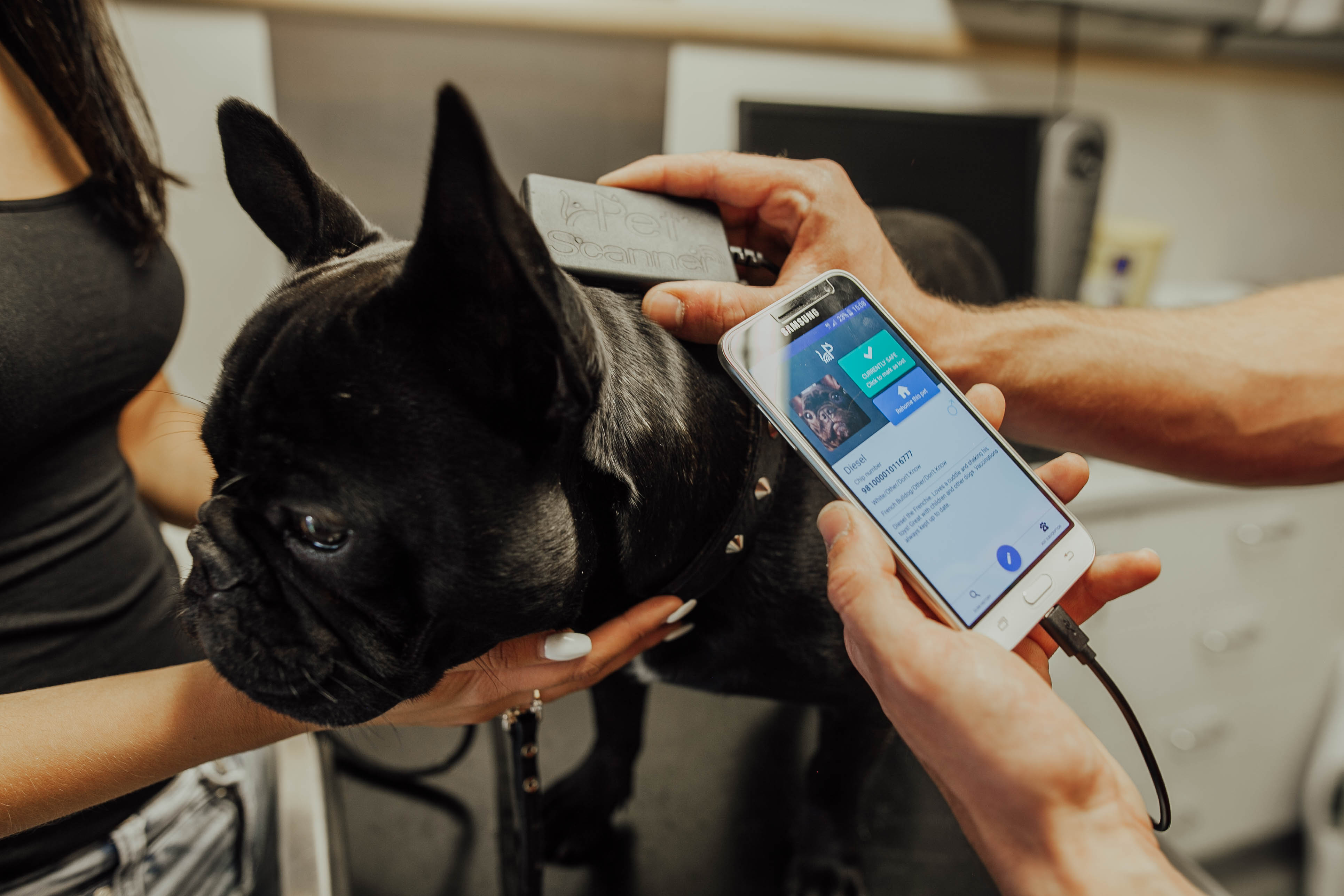 GPS Tracker VS Microchip – What Your Pet Really Needs
