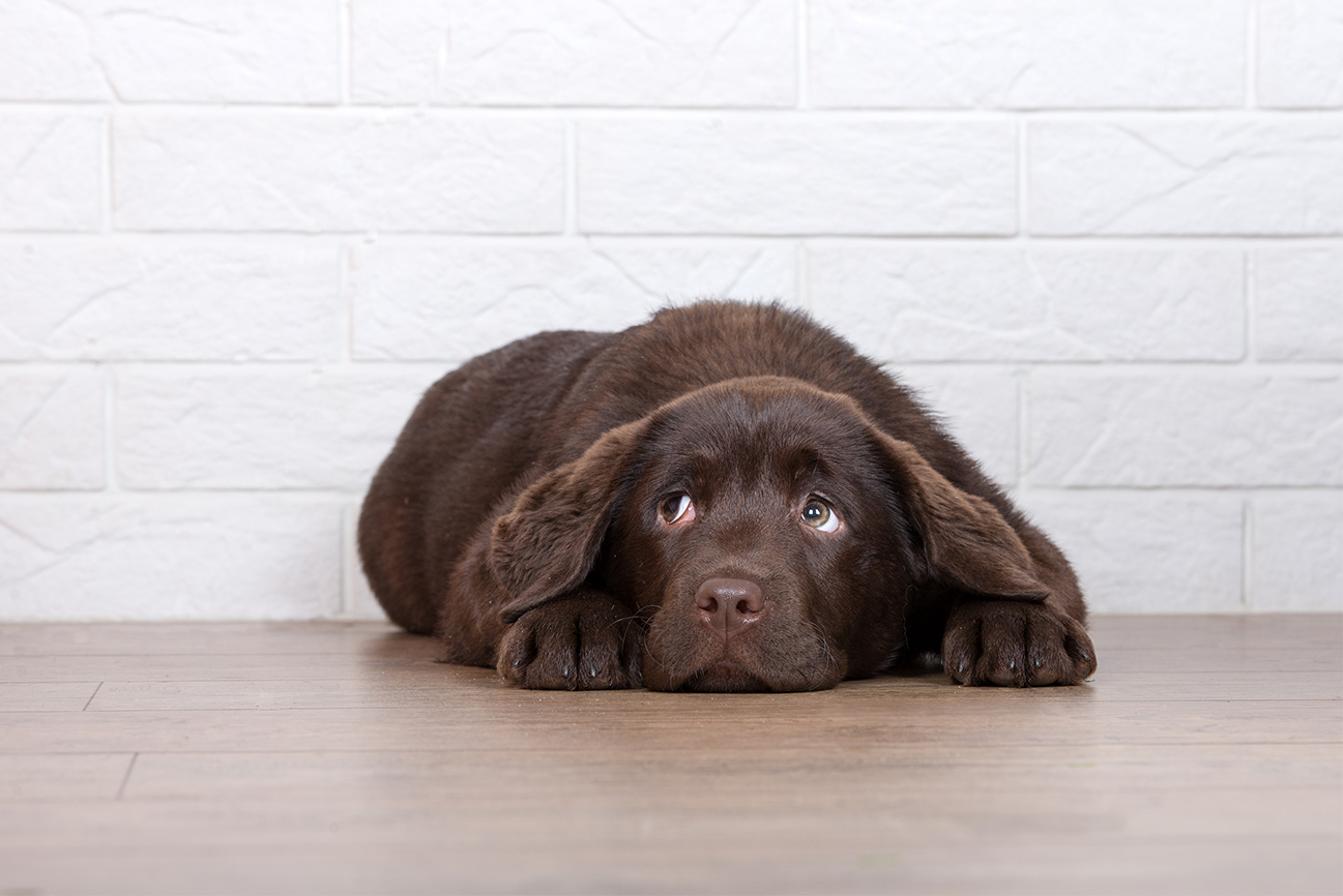 8 signs to tell your dog is stressed