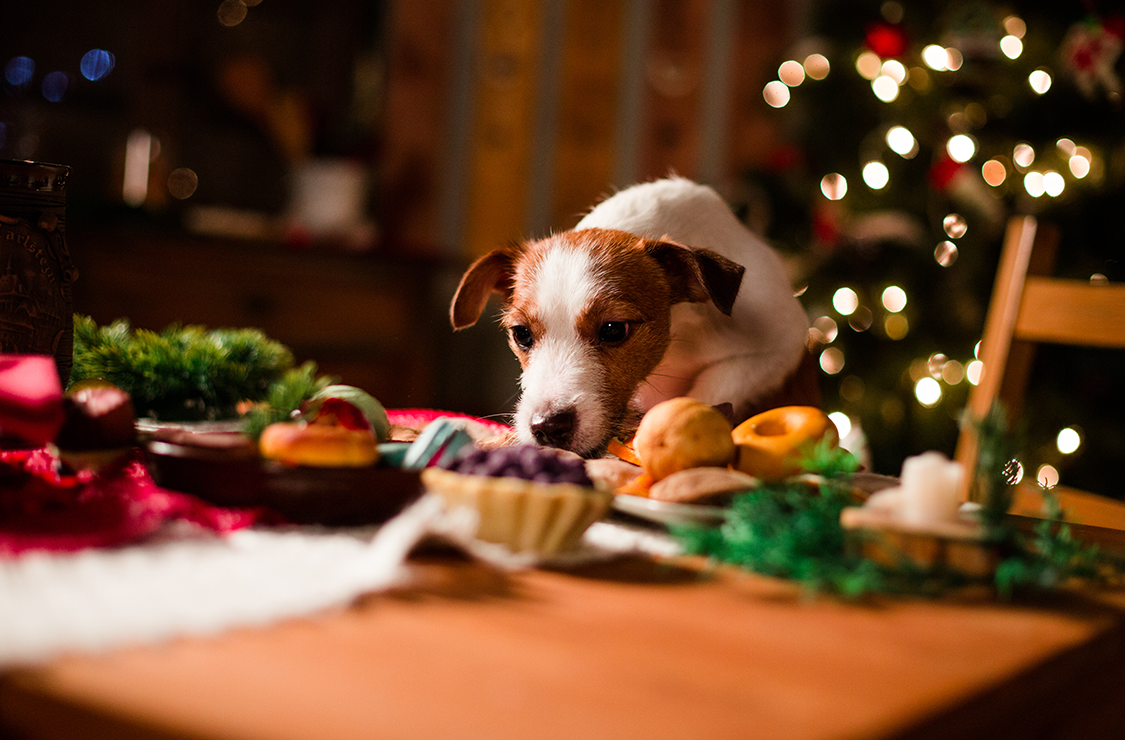Foods you shouldn't feed your dog at Christmas