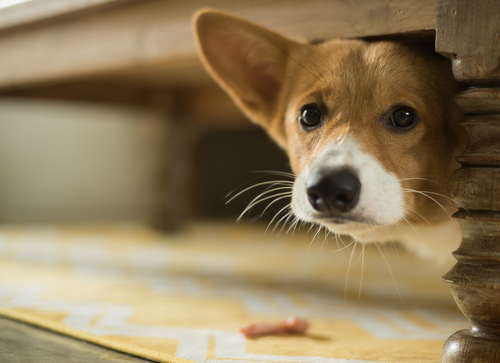 Signs to tell your dog is stressed