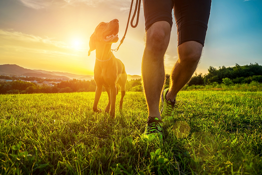 How To Keep Your Dogs Safe From Pet Theft