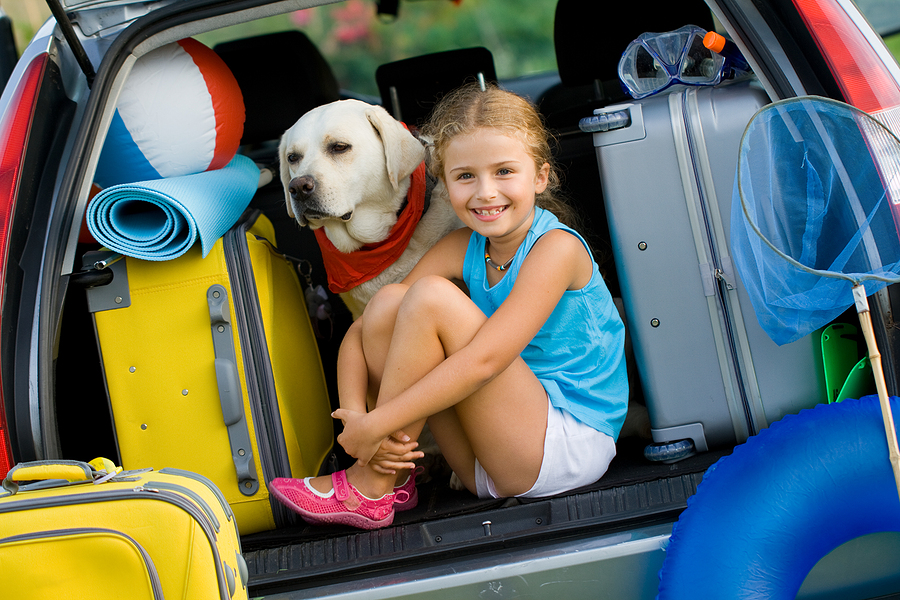 How To Have A Safe Holiday With Your Dog
