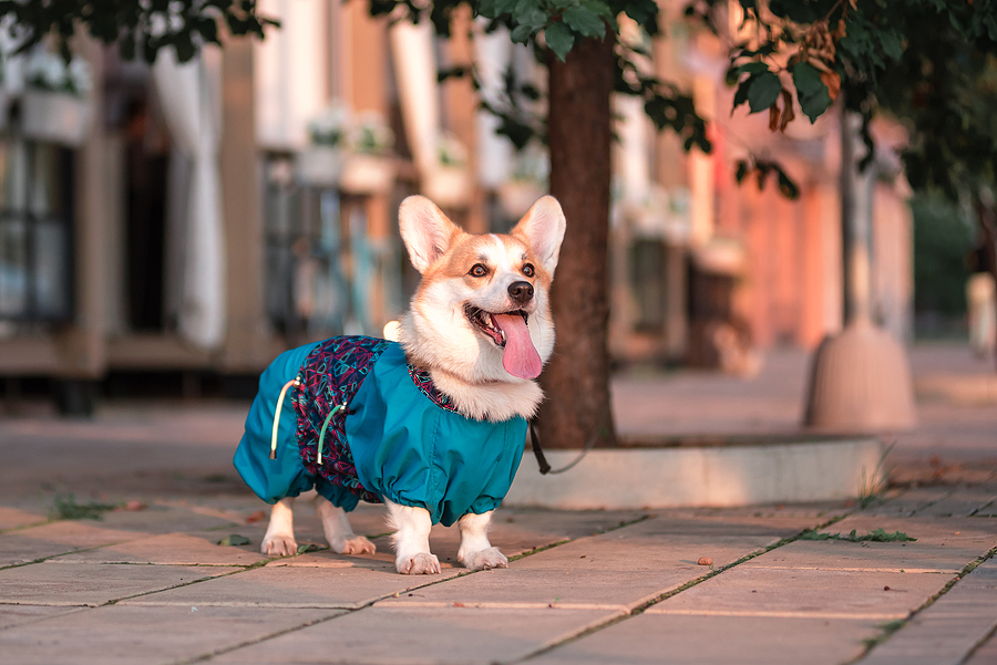 3 Top Tips For Keeping Pets In Cities